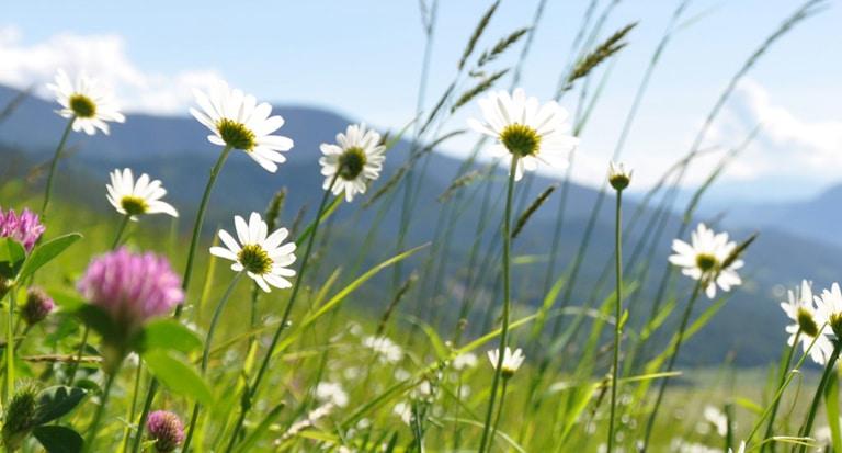 Estate-sole-profumo di fieno in giugno