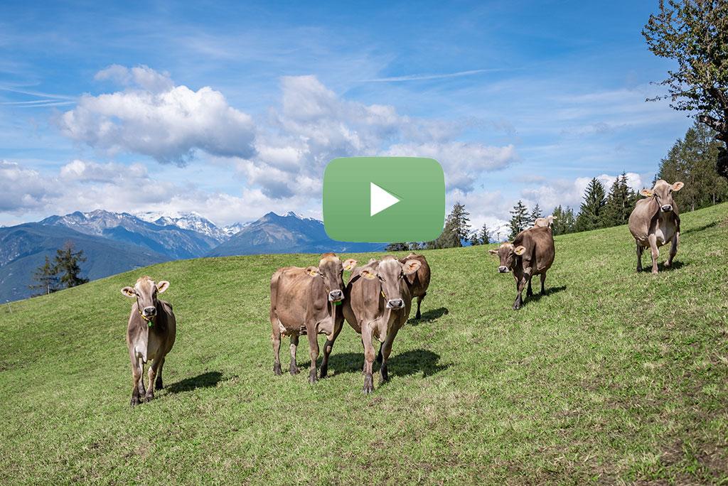 mitmach-bauernhof-video