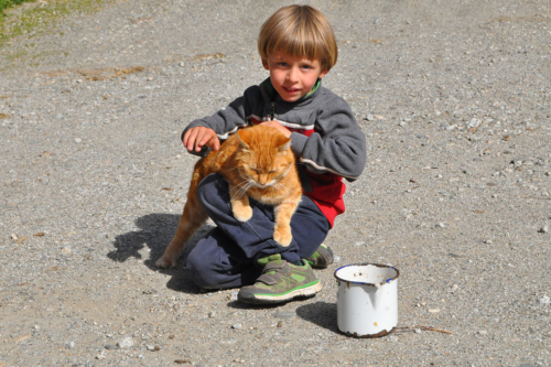 animali-gatto