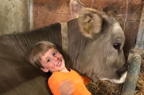 animali-mucca