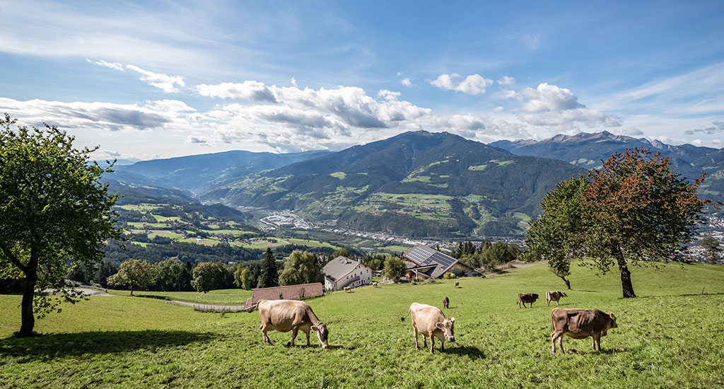 urlaub-am-bergbauernhof-brixen